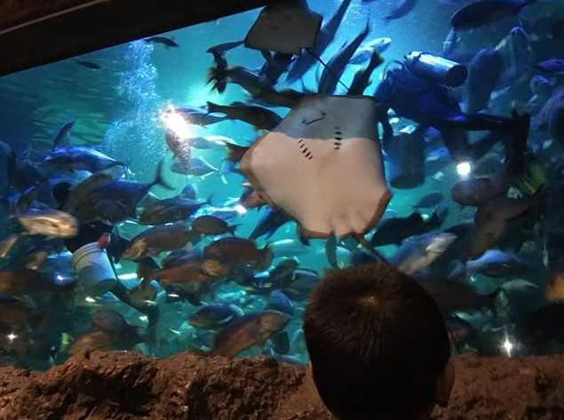 feeding main aquarium seaworld ancol