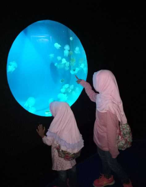 jellyfish sphere seaworld ancol