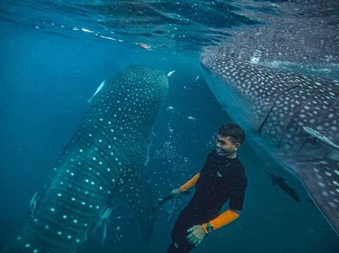 paus pulau derawan