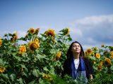 lokasi kebun bunga matahari