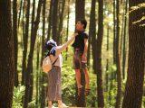 pinus gunung pancar – tempat wisata di bogor